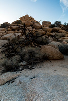 Joshua Tree NP 20150306